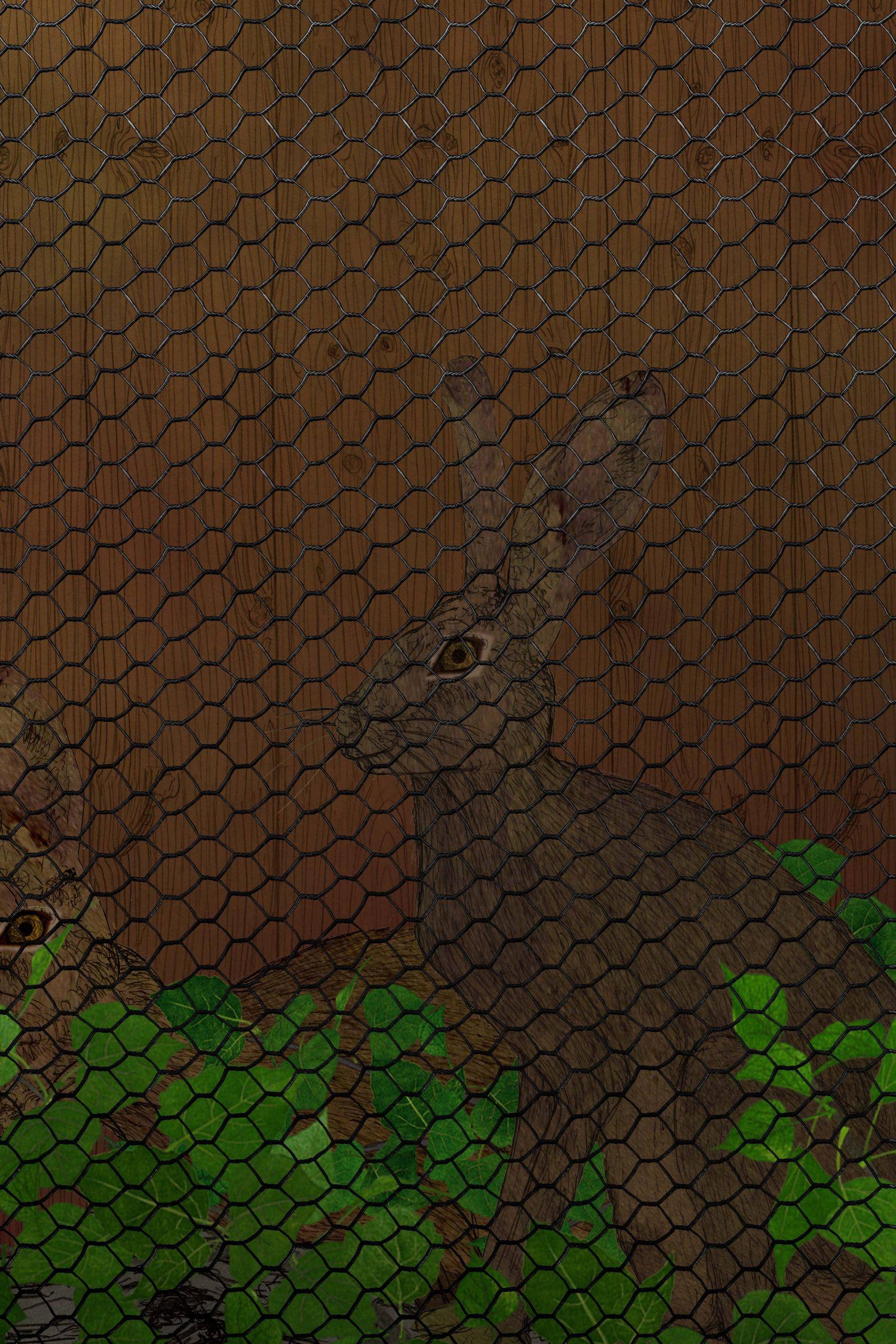 Gàbies de conills.